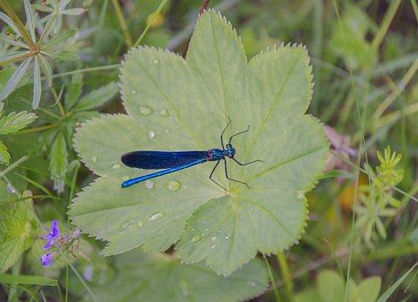 Dragonfly, Sheet, Summer, Macro, Leaves, Grass, Nature