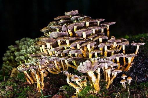 Mushroom, Floor Sponge, Stockschwaemme, Forest