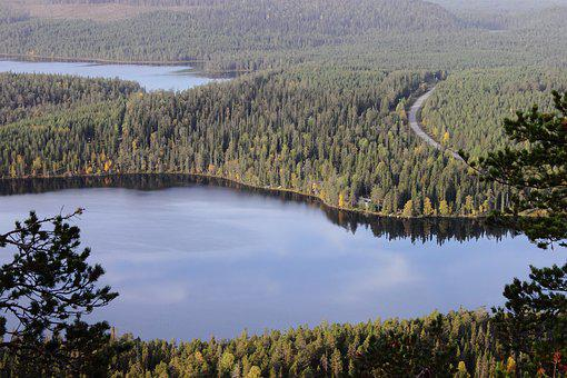Forest, Lake, Nature, Landscape, Autumn, Smooth Surface