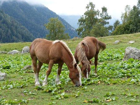 Horses, Pacer, Prado, Val D'aran, Wild Nature