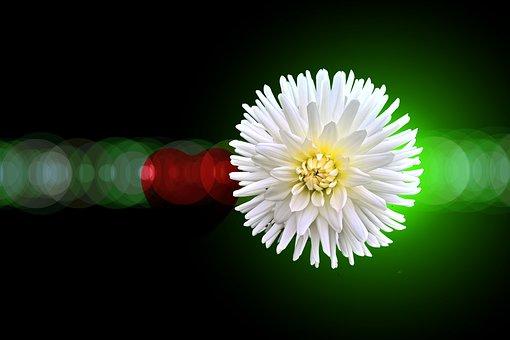 Plant, Heart, Love, Aperture, Lens Reflection