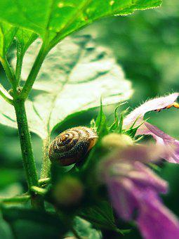 Nature, Green, Snail, Foliage, Garden, Vegetation, Leaf