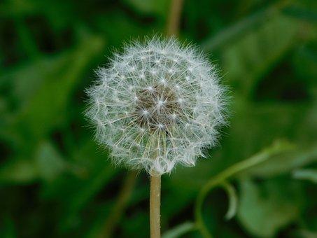 Flower, Plant, Withe, Floral, Garden, Natural, Botany