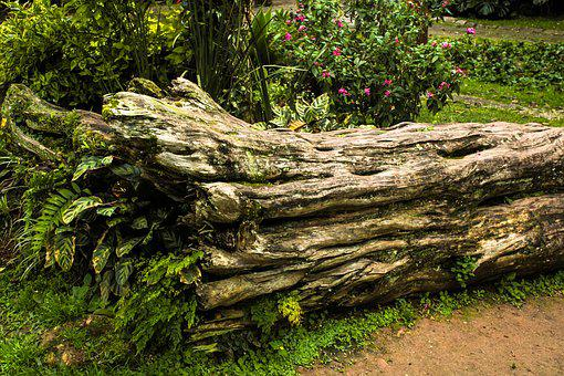 Trunk, Woods, Tree, Landscape, Environment, Old Tree