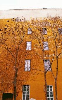 Yellow, Wall, Wood, Autumn