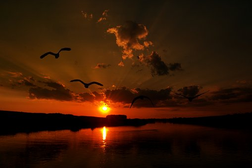 Sunset, Cloud, Birds, Water, Reflection, Red