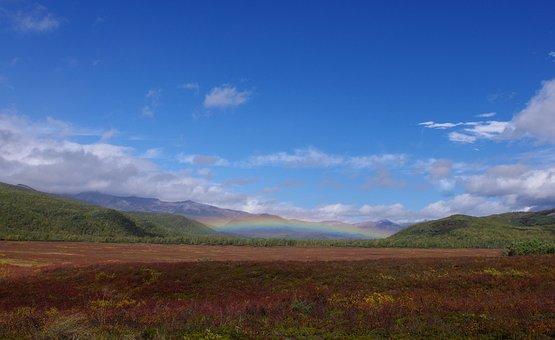 Autumn, Rainbow, Tundra, Creek, Forest, Trees
