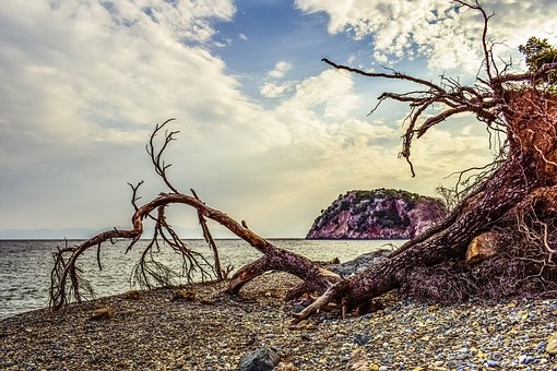 Pebble Beach, Wild, Fallen Tree, Debris, Beach, Nature