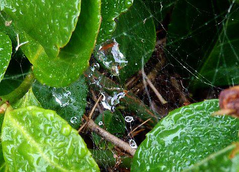Indian Summer, Spider Webs, Dewdrop, Cobweb, Dew