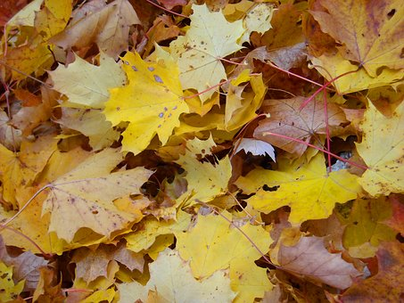 Dried Leaves, Leaves, Autumn, Dry Leaf, Foliage