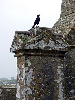 Ireland, Crow, Bird