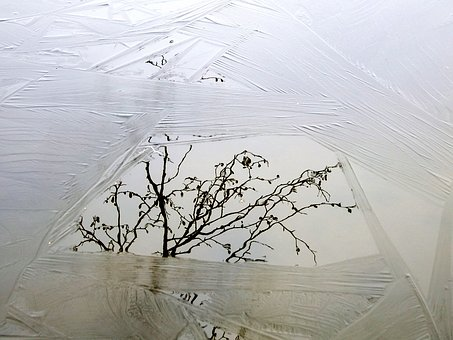 Lake, Ice, Freezing, Reflection, Branch, Trees, Nature