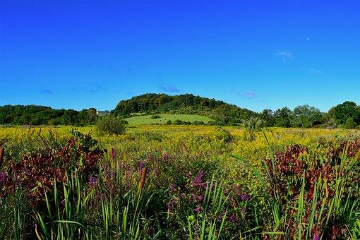 Field, Flowers, Nature, Summer, Grass, Meadow, Green