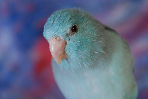 Parakeet, Bird, Pet, Green, Tropical, Colorful, Color