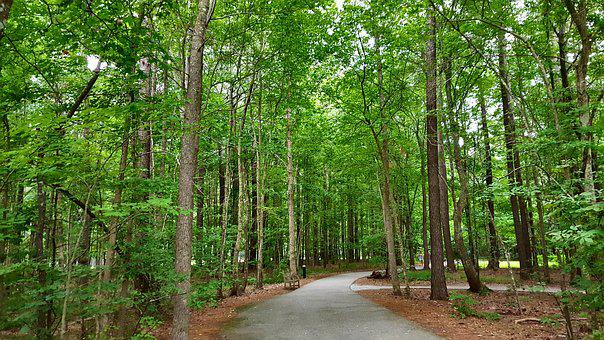 Trees, Green, Path, Nature, Environment, Leaf, Forest