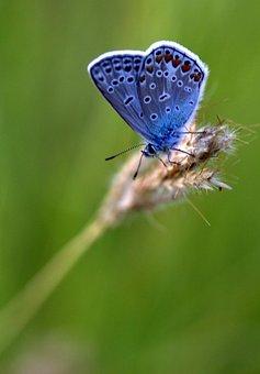 Butterfly, Blue, Spike, Rest