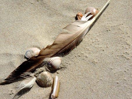 Bird Feather, Sand Beach, Mussels, Bird