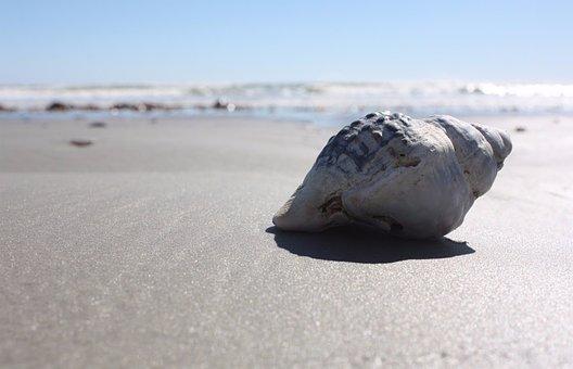 Shell, Beach, Sun, Summer, Sea, Tropical, Coast, Sand