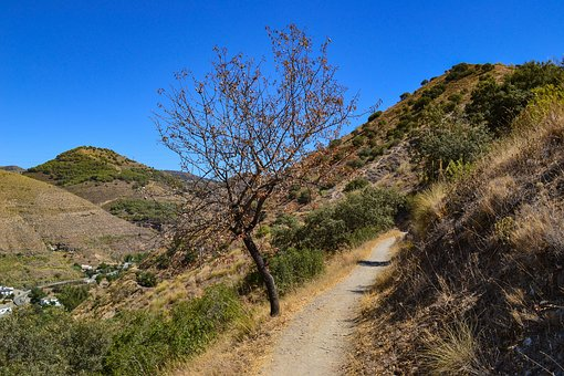 Tree, Path, Mountains, Sierra Nevada, Spain, Landscape