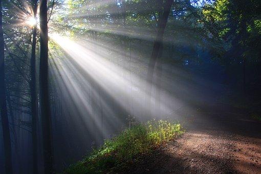 Sunbeam, Herbstnebel, Autumn Forest, Sunlight, Forest
