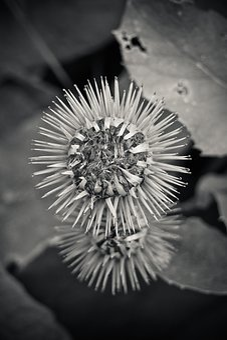Thistle, Plant, Nature, Flower, Thistle Flower, Autumn