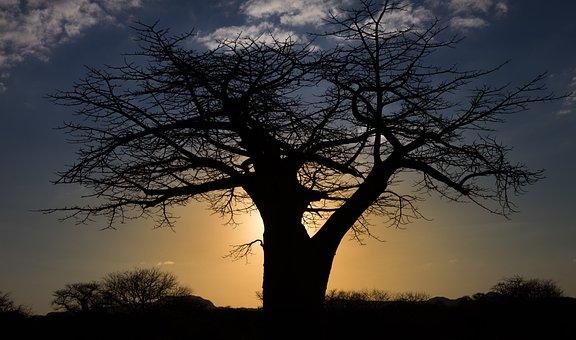 Baobab, Sunset, Africa, Nature, Tree, Landscape, Travel