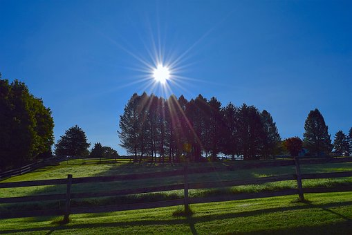Trees, Sunlight, Fence, Wood, Nature, Sun, Landscape