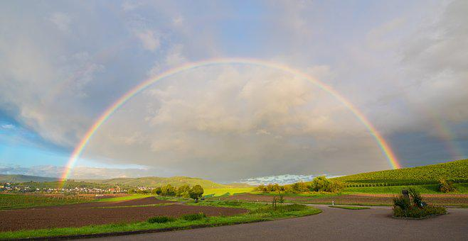 Rainbow, Germany, Heilbronn, Vines, Natural Spectacle
