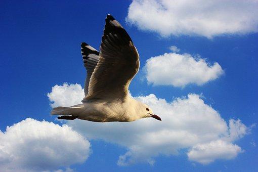 Seagull, Water Bird, Seevogel, Plumage, Wing, Feather