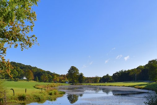 Pond, Water, Landscape, Grass, Green, Tree, Nature