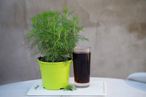 Coca-cola, Cola Bylinka, Plant, Beverage