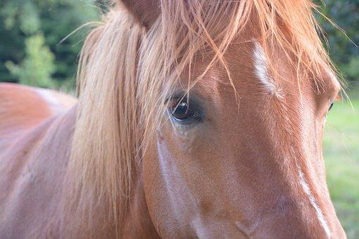 Horse, Mare, Look, Brown, Portrait, Horseback Riding