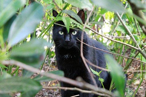 Cat, Black Cat, Black Kitty, Hangover Watched, Garden