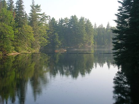 Lake, Evergreen, Water