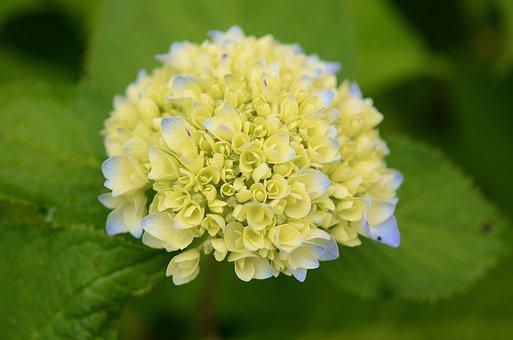 Flower, Natur, Spring, Floral, Summer, Natural, Green