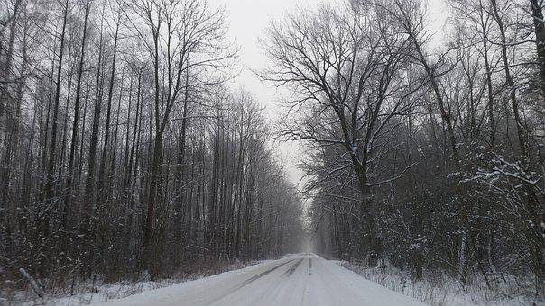 Winter, Way, Forest, Snow, Spacer, The Silence