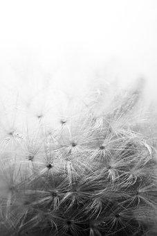 Dandelion, Air Bubbles, Cold, Frozen, Flower, Blossom