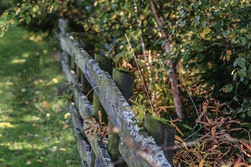 Autumn, Fall, Grid, Garden, Forest, Landscape, Nature