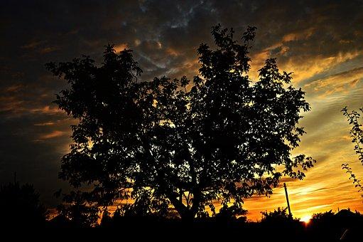 Nightfall, Sunset, Dusk, In The Evening, Night Lights