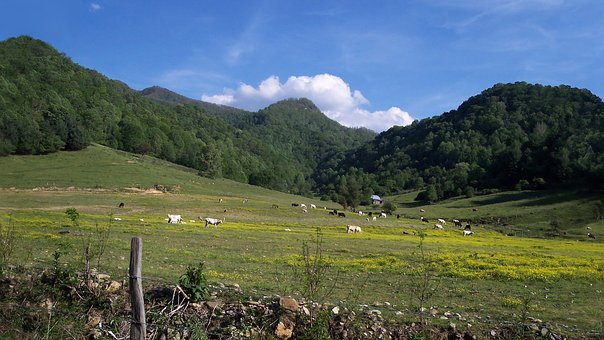 Mountain, Pasture, Bucolic, Herd, Cows, Skyline