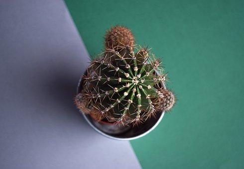 Cactus, Succulent, Botanical, Plant, Green, Tropical