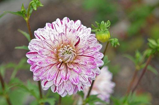 Flower, Pink, Pink Flowers, Floral, Plant, Spring