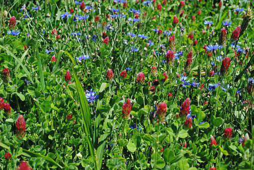 Spring, Green, Blue, Red, Grass, Plant, Garden, Floral