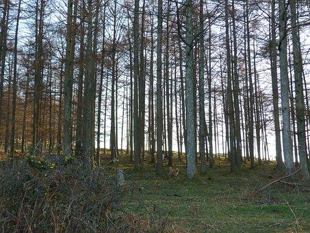 Trees, Jaizkibel, Shadow, Forest, Walk, Tree, Landscape