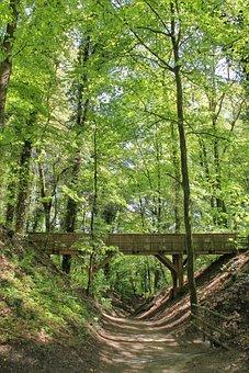 Oermter Mountain, Volkspark, Animal Enclosures, Forest