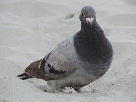 Dove, Bird, Animal, Retired, Nature, Feather, Fly, Sand