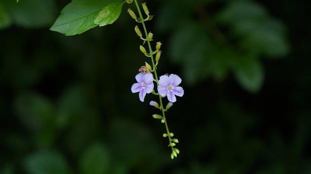 Flower, Purple, Background