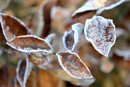 Foliage, Frost, Snow, Brown, Nature, Rime, Winter, Cold