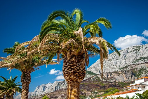 Palma, Mountains, Croatia, Tourism, The Stones, Tree