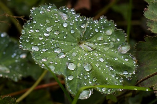 Leaf, Drip, Drop Of Water, Macro, Close, Green, Wet